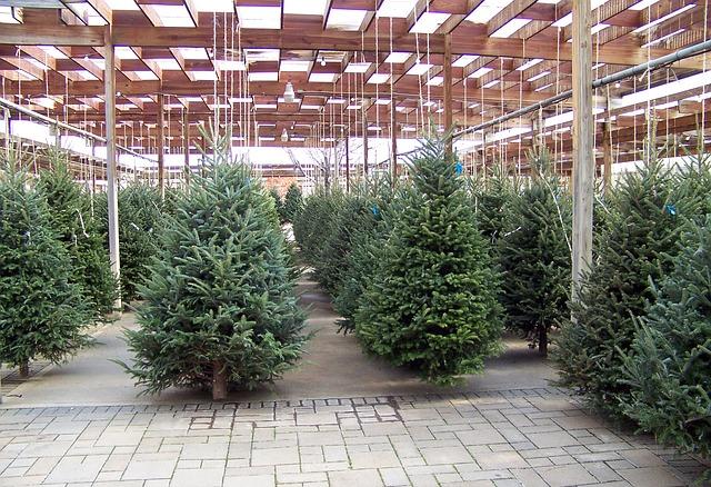 prodej stromků